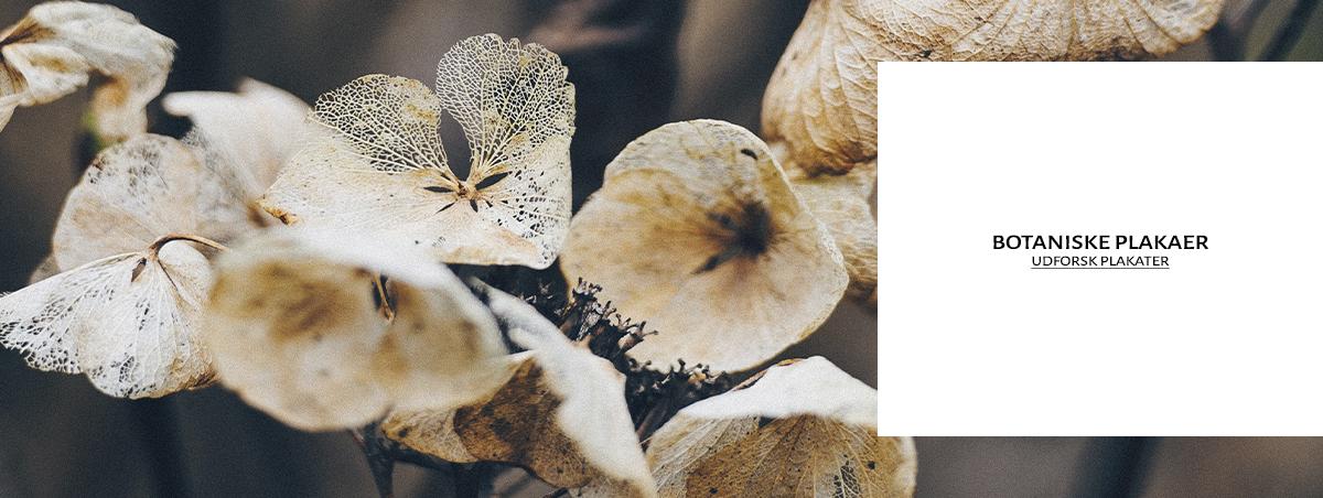 botaniske plakater